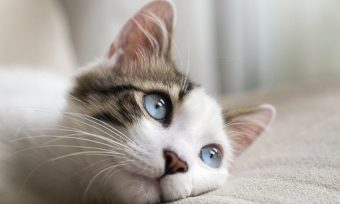 kako se pravi mačkica